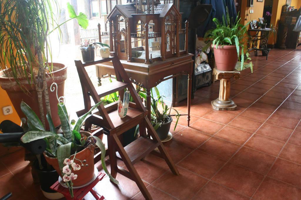 silla escalera decoración con platnas